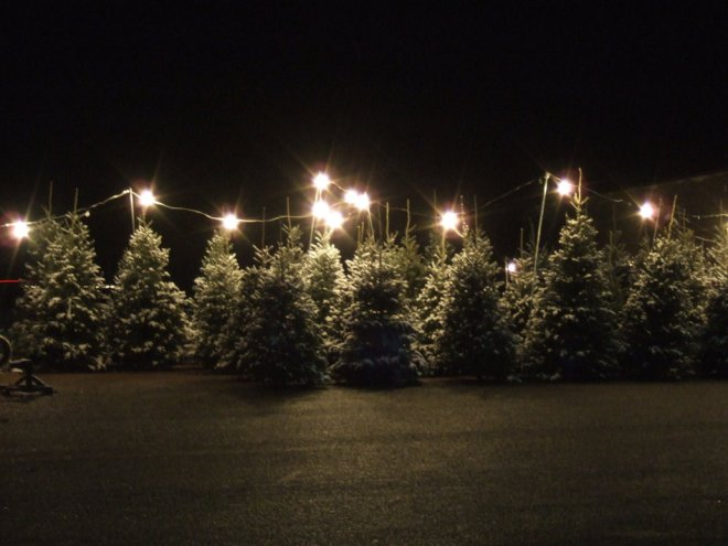 Finding The Perfect Christmas Tree Historic Occasions